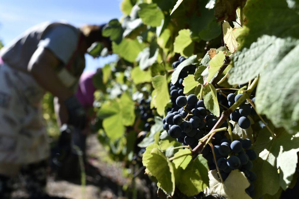 Covid-19: Mais de metade dos produtores de vinho com quebras nas vendas em 2020