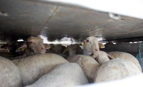 Exportações de animais vivos aumentam quase 21% em 2020 e impulsionam agroalimentar
