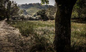 Incêndios: Proprietários Florestais defendem prorrogação do prazo de limpeza de terrenos