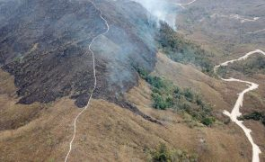 BNP Paribas anuncia medidas contra o desflorestamento no Brasil