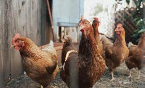 Rússia deteta primeiro caso de transmissão de estirpe da gripe das aves