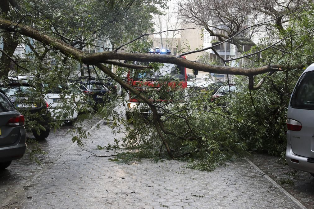 Portugal com 478 ocorrências até às 16h00 devido ao mau tempo
