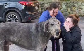 Reencontro emocionante de cão desaparecido com a família comove no Facebook [vídeo]
