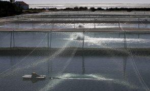 Noruegueses arrancam com aquacultura no mar de Cabo Verde e criam 400 empregos