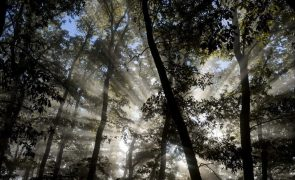 Ministro diz que próximo quadro comunitário de apoio prevê 200 ME para florestas