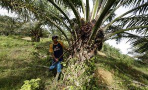 Óleo de palma exportado por São Tomé foi o dobro do cacau por quase metade do valor