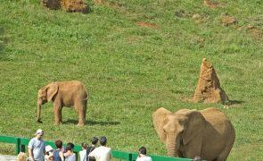 Elefante mata homem à trombada em Espanha