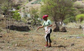 Seca leva Governo cabo-verdiano a pagar 30% do alimento ao gado na Boa Vista