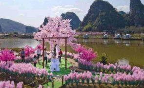 Homem transforma jardim em ilha de amor para recuperar ex-namorada