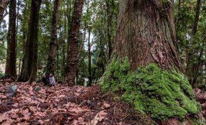 Conselho de Ministros é hoje dedicado às florestas e presidido pelo Presidente da República