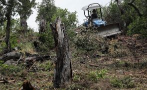 Governo prevê prolongar prazo para limpeza de terrenos pelos proprietários até 15 de maio