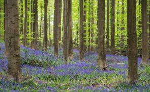 Governo aprova investimento de 30 ME em medidas para valorizar paisagem florestal