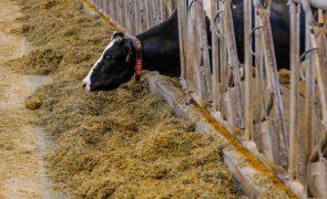 UE e EUA chegam a acordo sobre quotas agrícolas após dois anos de discussão