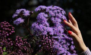 Reencontradas 17 espécies de plantas europeias consideradas extintas, uma delas nativa de Portugal