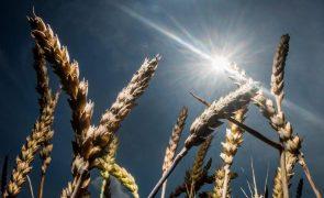 Governo moçambicano prevê aumento de 11% na produção de cereais - PM