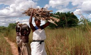 Angola quer lançar industrialização da mandioca com foco na produção de amido