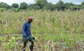 FAO promove agricultura
