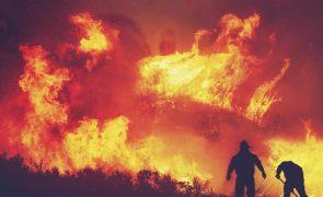 Autor do incêndio que causou a morte de 73 animais vai a julgamento