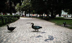Calçada portuguesa candidata a Património Cultural Imaterial Nacional