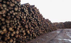 Angola arrecadou 15,9 ME nos últimos dois meses com exportação de madeira