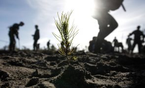Incêndios: Movimento de Tábua questiona pacote financeiro para a floresta