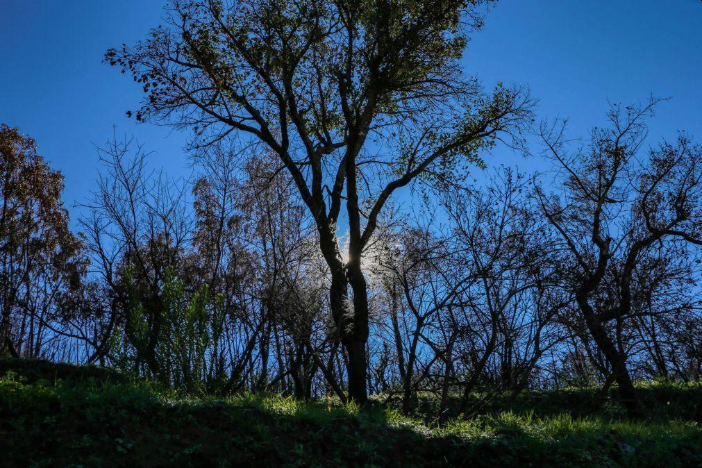 Novo projeto para valorização e defesa da floresta portuguesa lançado hoje