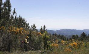 ICNF investe perto de 2,3ME em projetos no Parque Natural da Serra de São Mamede