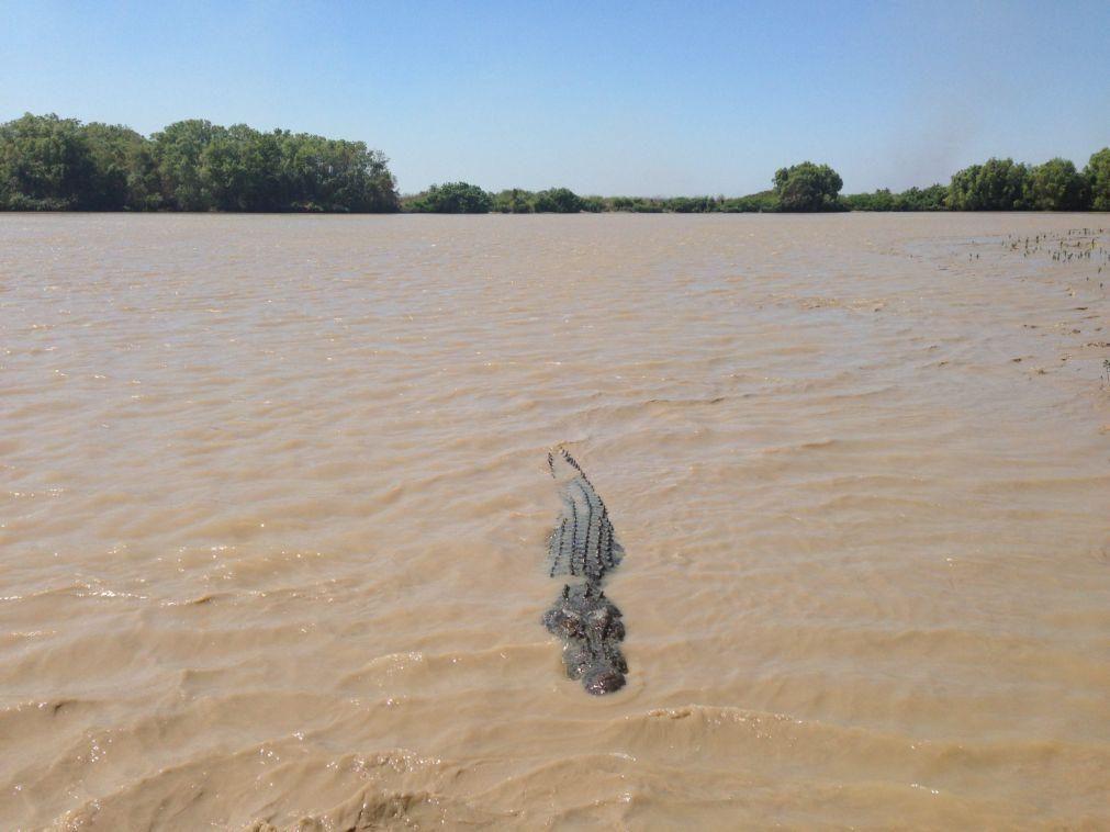 Animais selvagens matam 97 moçambicanos em 2020, crocodilo é o mais letal