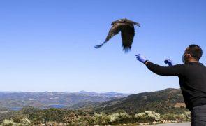 Centro de recuperação do Baixo Sabor já recuperou e devolveu à natureza 250 aves