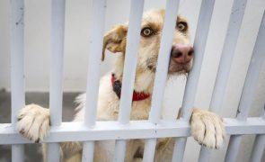 Assembleia da Madeira aprova criação do Provedor do Animal