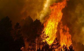 Idosa encontrada carbonizada em incêndio florestal em Vila Nova de Paiva