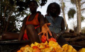Guiné-Bissau exportou menos 20,9% de castanha de caju em 2020, quase toda com destino à Índia