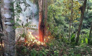Destruição de florestas tropicais aumentou em 2020 - ONG