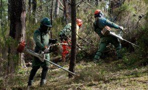 Portugal tem mais de mil freguesias prioritárias na limpeza da floresta