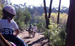 Parques de Sintra reabrem em 5 de abril após segundo confinamento