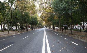 Câmara de Lisboa vai plantar 120 mil árvores e 116 mil arbustos entre 2022 e 2023