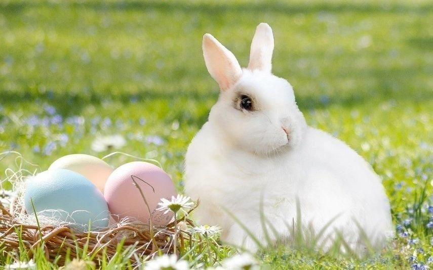 Páscoa A origem do tradicional coelho que põe ovos de chocolate