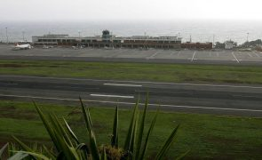 Covid-19: Madeira vai experimentar cães na deteção de pessoas infetadas no aeroporto