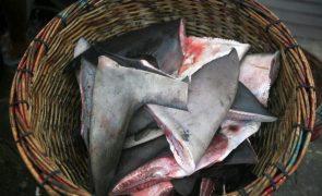 Portugal pesca tubarão e raia em excesso, alerta organização ambientalista