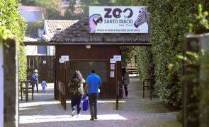 Criança de 5 anos fica sem dedo após ser mordida por macaco no zoo de Gaia