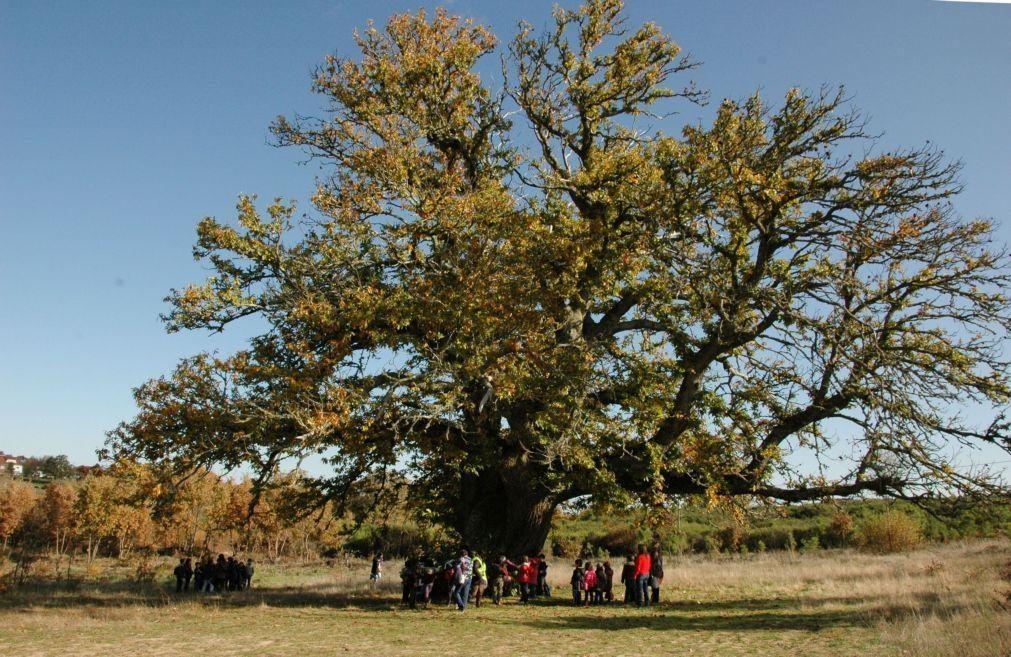 Vinhais com mais de 900 mil euros para combate a doenças do castanheiro