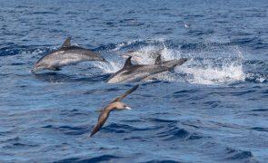 Projeto europeu quer desenvolver estratégia de mitação de captura acidental de cetáceos