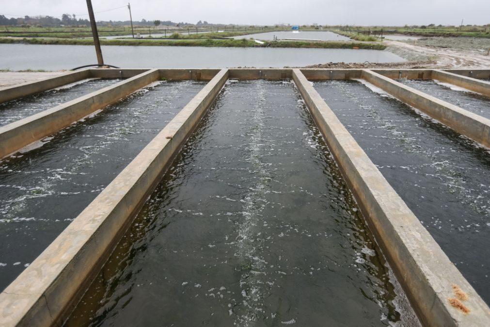 Covid-19: Mar 2020 atribuiu quase 15 ME à pesca e aquicultura desde 2020