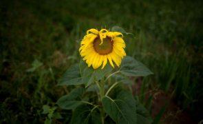 Covid-19: Produtores de plantas e flores reclamam apoios a fundo perdido e contestam crédito