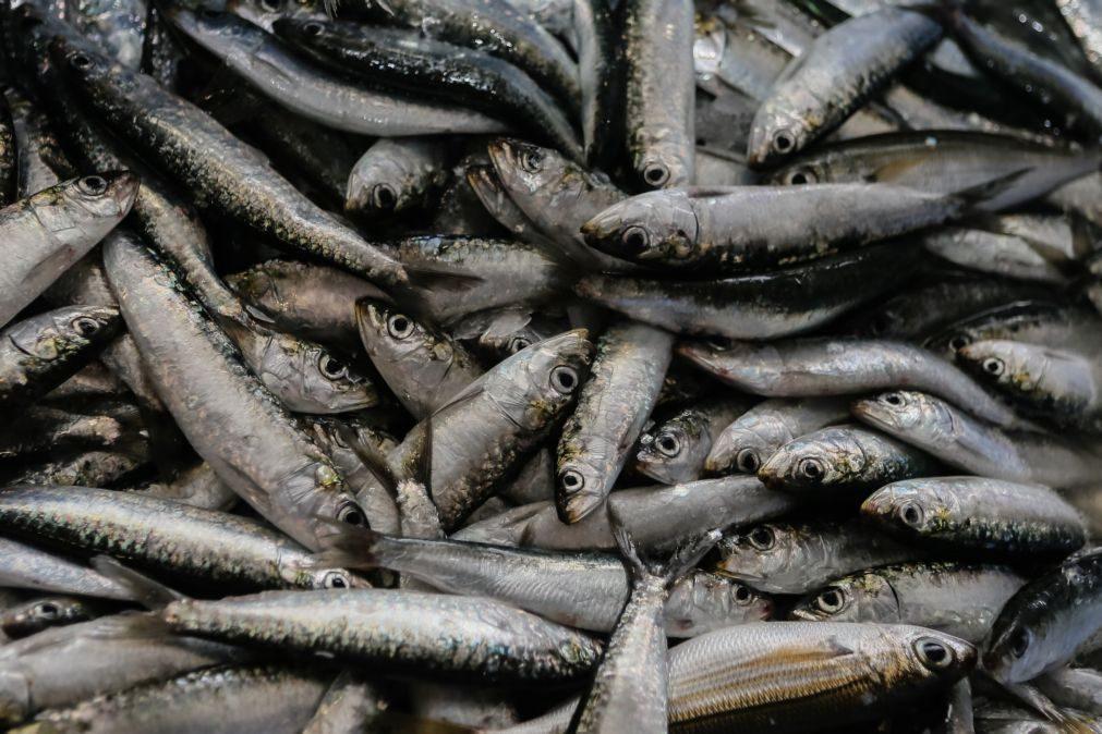 Quota de pesca da sardinha fixada em 10 mil toneladas até julho, mas deverá aumentar - Governo