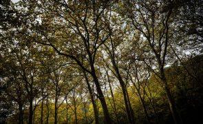 Cerca de 3.000 infrações na arborização com espécies florestais entre 2013 e 2020 - ICNF