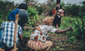 Vacina contra malária apresenta 77% de eficácia
