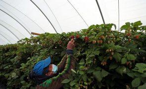 Covid-19: Governo impõe registo diário de trabalhadores de explorações agrícolas e construção