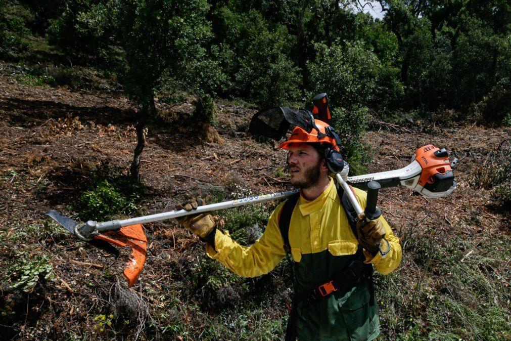 Incêndios: Parlamento recomenda prorrogação para 31 de maio da limpeza de terrenos