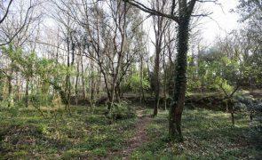 Investigadores de Coimbra criam aplicação para medir volume de diversas árvores